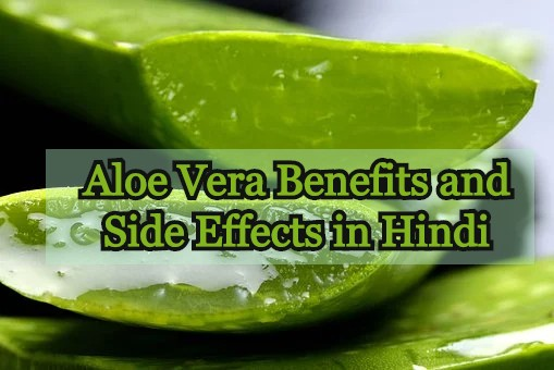 Aloe Vera Benefits and Side Effects in Hindi